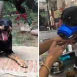 perro callejero rescate canada - Callejero que perdió una pata fue adoptado por familia en Canadá. Le darán la vida que merece