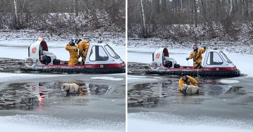 perro lago helado rescate - Bomberos rescatan a perro que estaba inmóvil congelándose en un lago. Ya se había dado por vencido