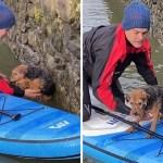 perro rescatado canoa 1 - Perrita es rescatada de ahogarse luego que un hombre en kayak la salvara. La calmó y la subió con él