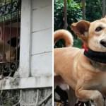 perro rescatado espacio chico casa - Rescatan a perro que vivía en un espacio ínfimo y sucio del que siempre trataba de huir. Hoy brilla