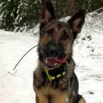 perro suicida rescate  - Perro policía salva a una persona que se iba a suicidar. Encontró al sujeto congelado, pero aún vivo