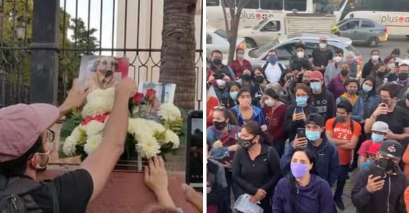 """portada capitan perro - Vecinos despiden a """"Capitán"""", un perrito adoptado por la ciudad de Culiacán. Fue un gran compañero"""