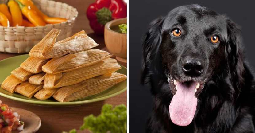 tamales para perrito - En México, crearon tamales para que perros coman el Día de la Candelaria. No los dejarán por fuera