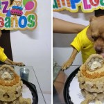 perro fiesta pastel sonrisa - Perrito no para de sonreír al recibir una fiesta sorpresa de cumpleaños. Fue a devorar el pastel