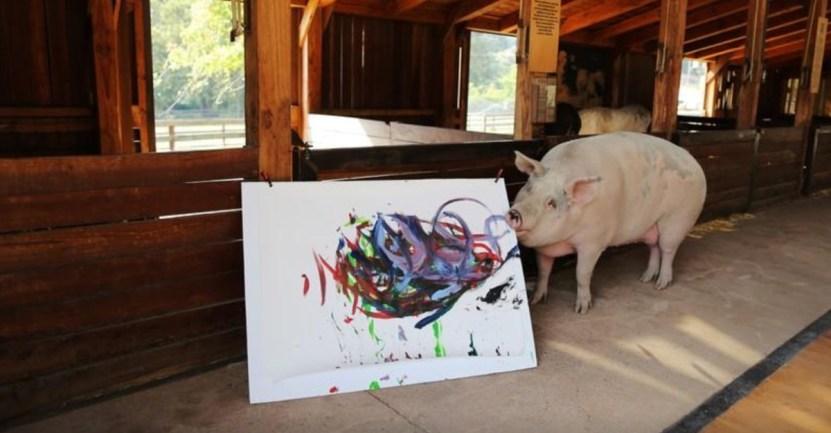 cerdita matadero artista - Cerdita fue salvada de un matadero y se convirtió en una artista de la pintura. La llaman Pigcasso