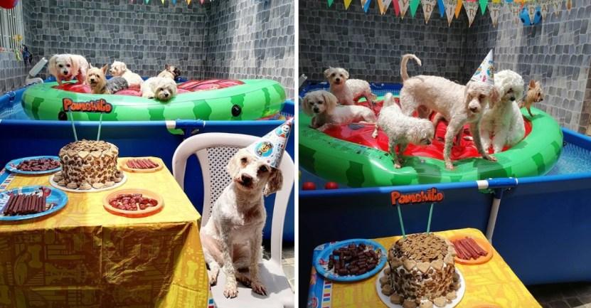 perro fiesta piscina distanciamiento - Perrito celebró su cumpleaños en una piscina e invitó a sus amigos. No respetó el distanciamiento