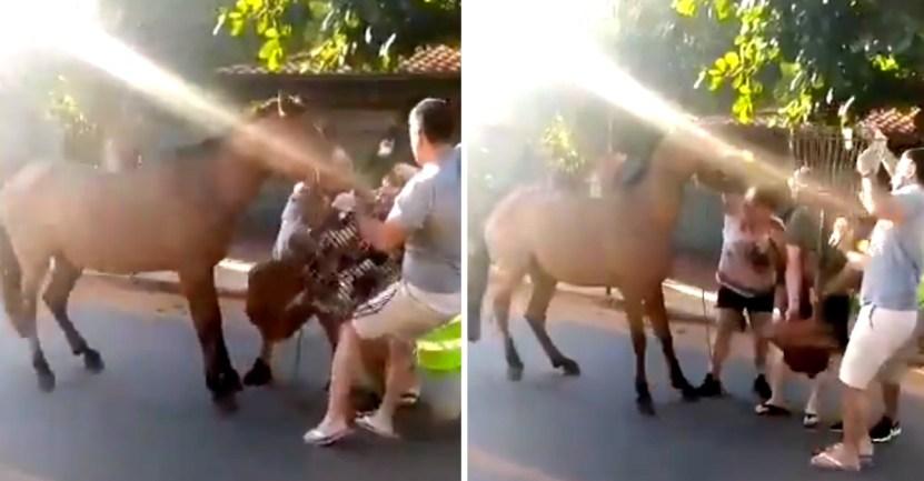 66 caballo atrapado sangrante boca hocico diente - Caballo encadenado a un basurero lo arranca y arrastra con su hocico. Rompió su boca por libertad