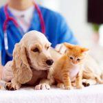 Cuidado con los parasitos en nuestras mascotas - Cuidado con los parásitos en nuestras mascotas