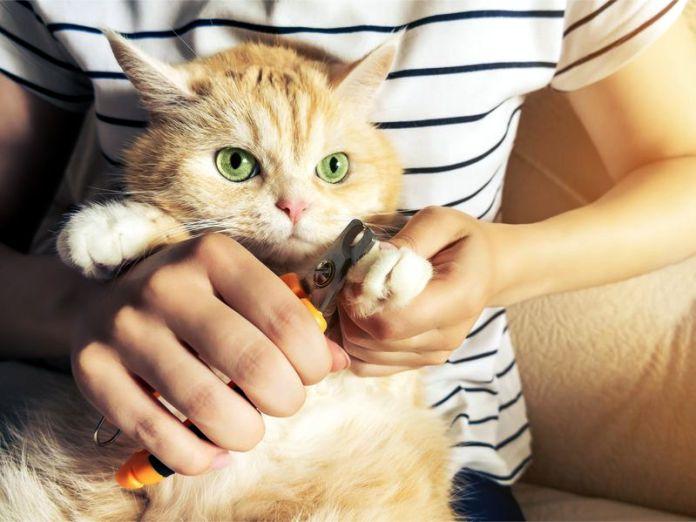 TOP 5 de las razas de gatos mas tranquilas - TOP 5 de las razas de gatos más tranquilas