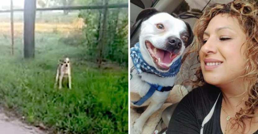 mujer se levanta a diario a las 4 de la madrugada - Mujer lleva 10 años parándose a las 4 am para rescatar perritos abandonados. Los dejan de madrugada