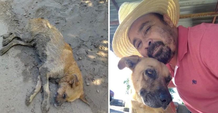 """perro rescate familia - Sucio y sin hogar, dormía en el barro hasta que su padre lo rescató: """"Con amor se puede hacer mucho"""""""