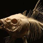 Los oceanos se quedaran sin peces para 2048 - ¿Los océanos se quedarán sin peces para 2048?