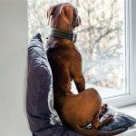 Si no te atreves a dejar a tu perro solo en casa estos consejos te serviran - Si no te atreves a dejar a tu perro solo en casa, estos consejos te servirán