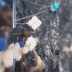 rescate tortuga 1.png 242310155 - Rescatan a tortuga atrapada a un cable de boya en Mazatlán