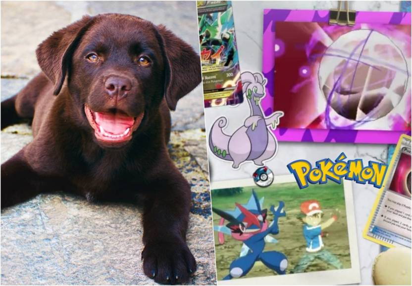 nino salva perrito vendiendo cartas pokemon - Niño vende su colección de cartas Pokemón para salvar a su perrito