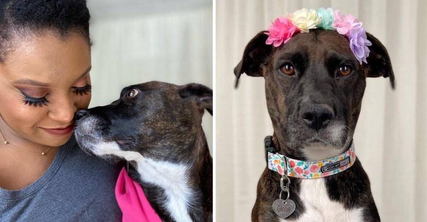 """perrita mujer adopta - Cachorra de """"ojos tristes"""" conquistó el corazón de una mujer: Lo adoptó y le dio una bella familia"""