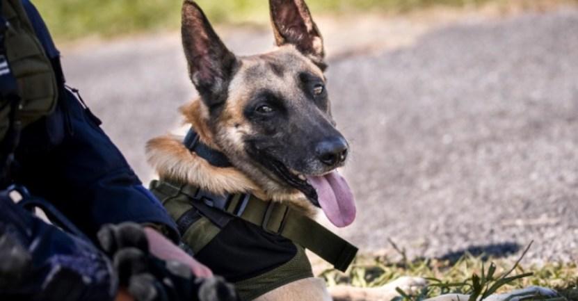 perro policia adolescente - Perro policía encontró a joven desparecida en un bosque. Estaba inconsciente y acostada entre hojas