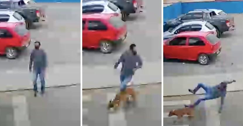 """portada perrito atropello hombre calle dejo fracturado - Perrito """"atropelló"""" a un hombre en la calle y lo dejó fracturado. Estaba persiguiendo a sus dueños"""