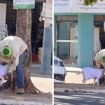 55 perro brasil frio personasinhogar cubrir cuidado mascota - Persona sin hogar vistió a su perrita para protegerla del frío. Abriga a su compañera en las calles