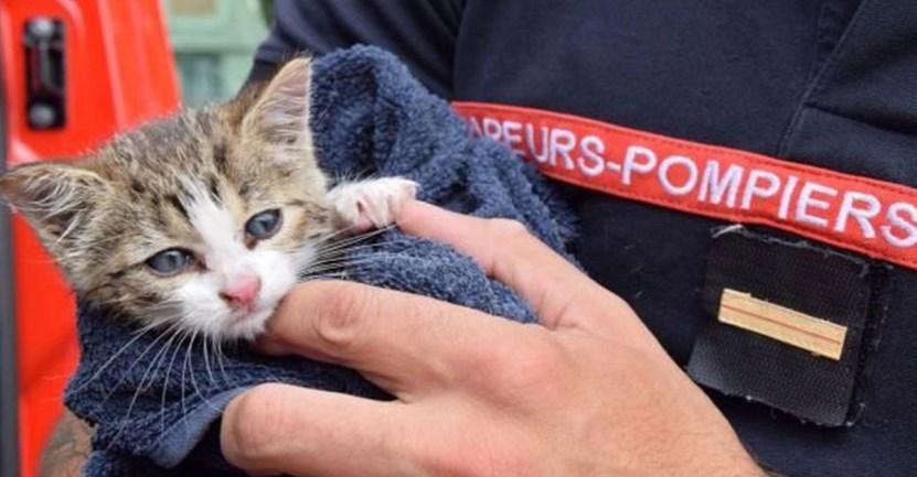 gato rescate bomberos - Bombero en Francia adoptó al gatito que rescató dentro de una alcantarilla. Tenía 3 meses de nacido