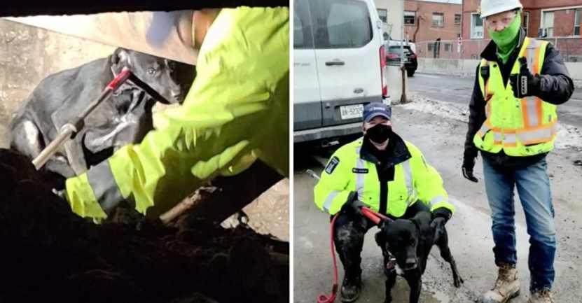 obreros construccion perro - Encuentran perro que pasó 6 semanas extraviado en una obra de construcción. Se escondió por miedo