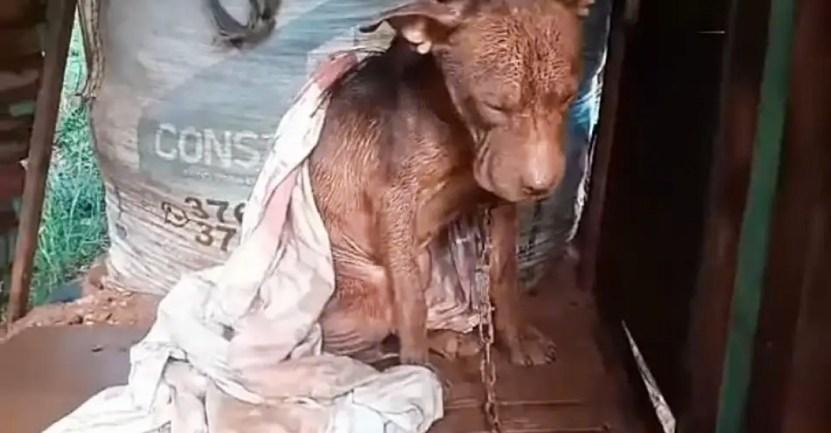 """pitbull vecino rescata demanda - Joven rescató al pitbull de su vecino en pésimas condiciones y ahora teme que lo acusen de """"ladrón"""""""