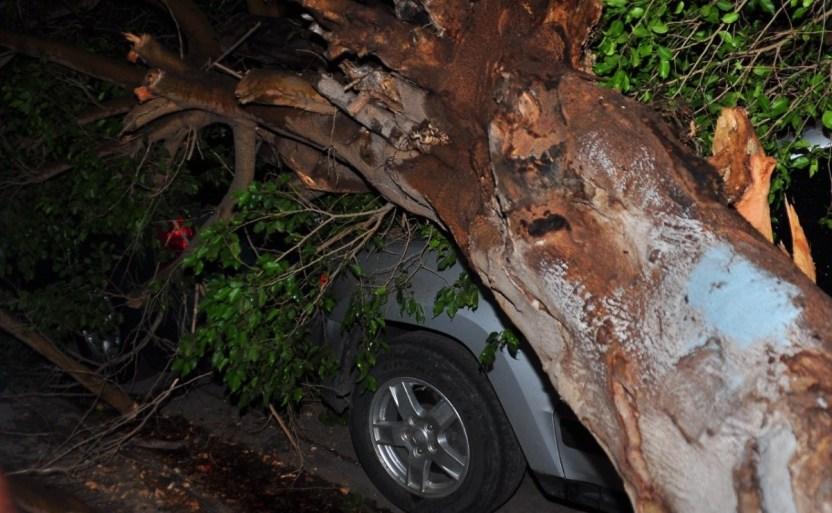 whatsapp image 2021 07 29 at 23 24 48.jpeg 242310155 - Árbol cae sobre dos vehículos estacionados en Los Mochis, Sinaloa