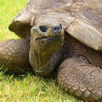 Por que las tortugas viven tanto tiempo - ¿Por qué las tortugas logran vivir tantos años?