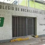 cats 3 crop1628388220114.jpg 242310155 - Cobaes Sinaloa regresa a clases y será de manera virtual