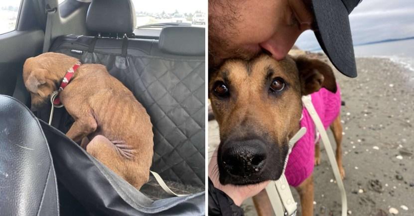 perrita terror adopcion - Perrita rescatada que sentía terror por las personas ya confía en su familia. Es leal y protectora