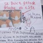 """gato peluche nina - Niña perdió su gato peluche y ofreció una recompensa por encontrarlo: """"Lo extraño, es mi mejor amigo"""""""