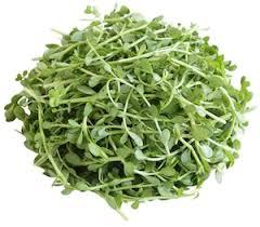 Foto Bacopa monnieri plant
