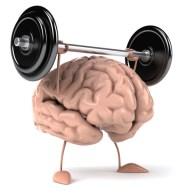 Hersenen die gewicht heffen en zo concentratie verbeteren