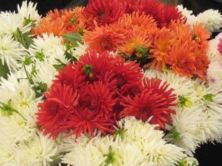 verano 2009 flores