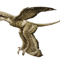Paleontología china