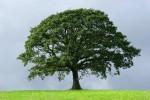 St. Basil the Tree Hugger?