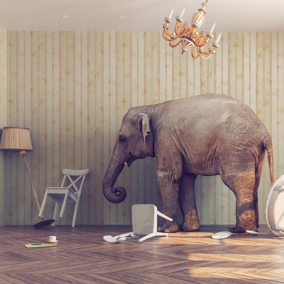 Six Elephants in the Room   Concordia Theology