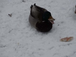 Would you like some snow with that bread?