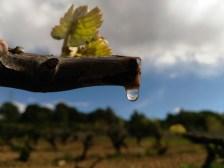 Abril CEP PLORANT A la primavera la savia comença a fluir i cau en forma de llàgrima. Autor/a: Germán de la Fuente Cané Operador/a inscrit: CT/3573/P Germán de la Fuente Cané Lloc: Gelida (Alt Penedès)