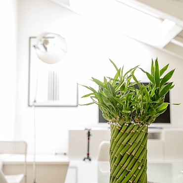 White sun-filled waiting room with green bamboo plant in straight vase