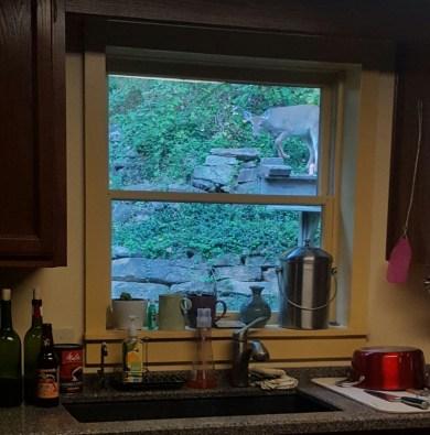 deer-in-window