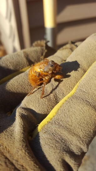 cicada-stairs