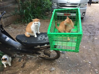 cat-cart