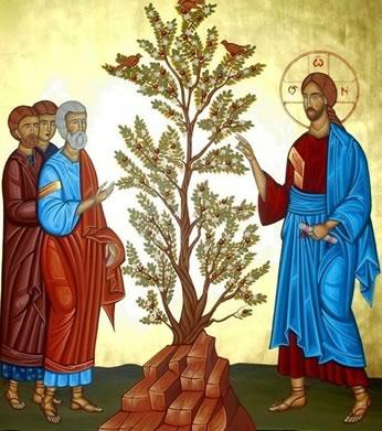 Liturgia e Homilia do XI Domingo do Tempo Comum - Ano B