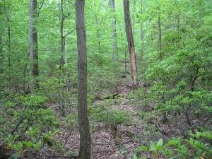 Cecil's Forest Conservation Program Gets Favorable Review