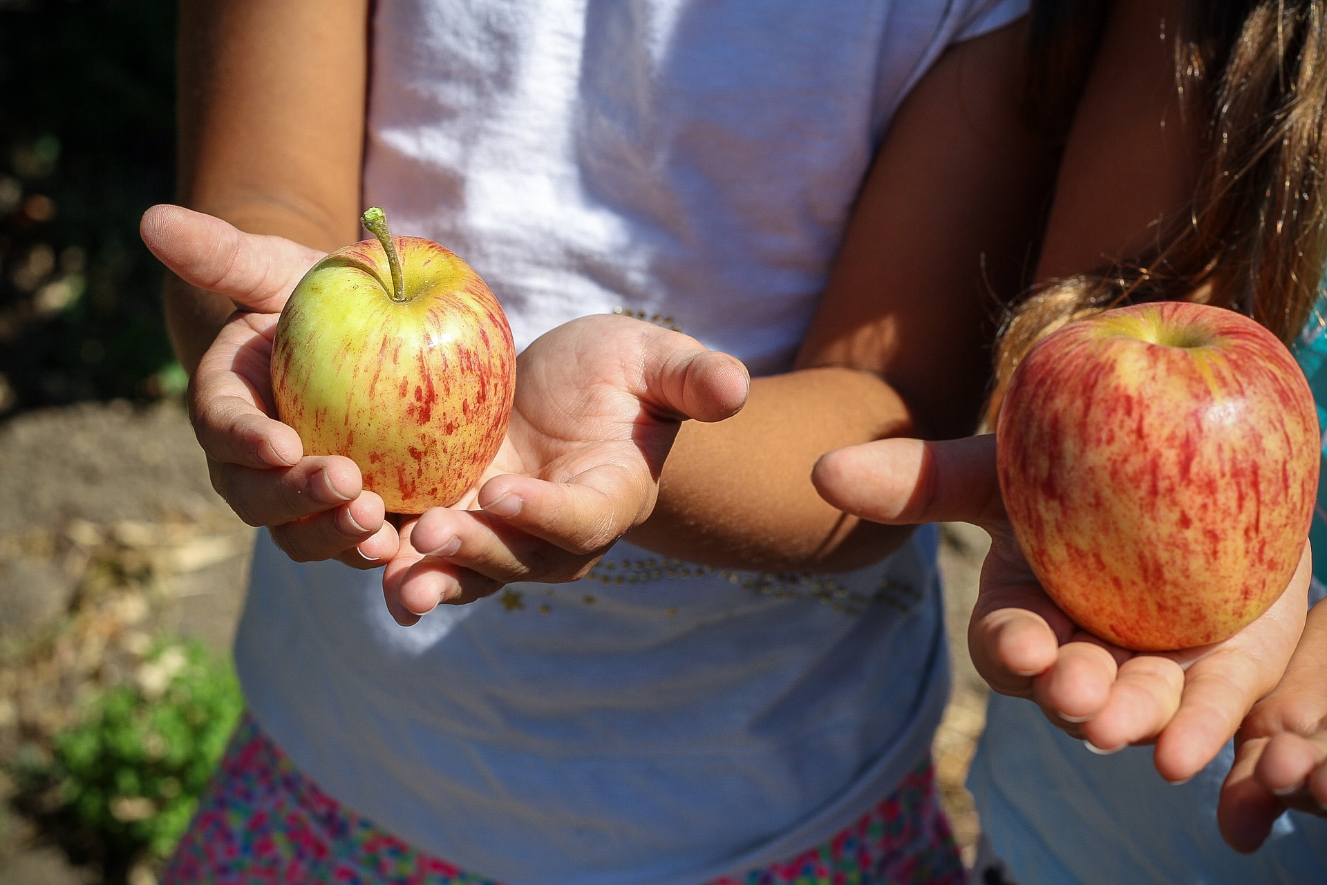 Maryland Receives Two Farm to School Grants from the USDA
