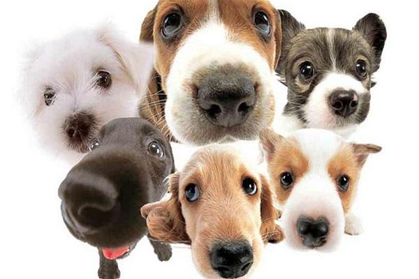 Los perros se comunican con nosotros