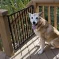 Cabin Decks - Pet Friendly