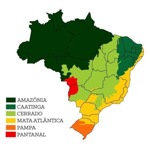 EXCLUSIVO: Análise dos dados históricos dos últimos 20 anos da Amazônia 20