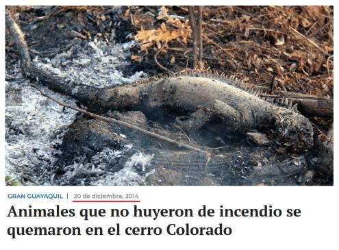 Checamos! Para criticar suposto descaso com a Amazônia, celebridades e líderes políticos publicam imagens antigas 34